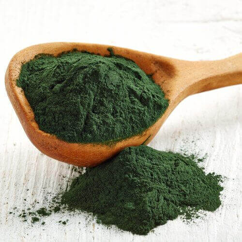 Anapur contains chlorella